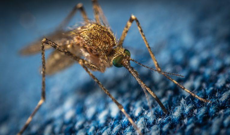 Požarevački komarci padaju u subotu
