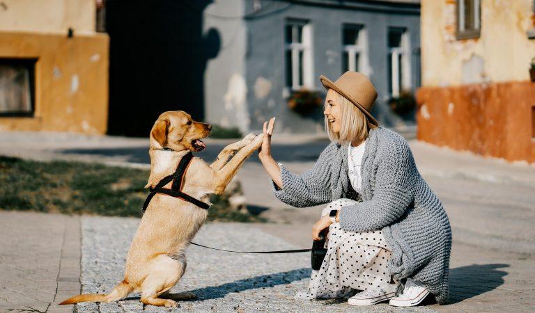 U Nemačkoj vlasnici pasa plaćaju porez i do 200 evra