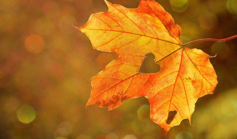 Jesen stiže, a ovo su zanimljivosti vezane za godišnje doba